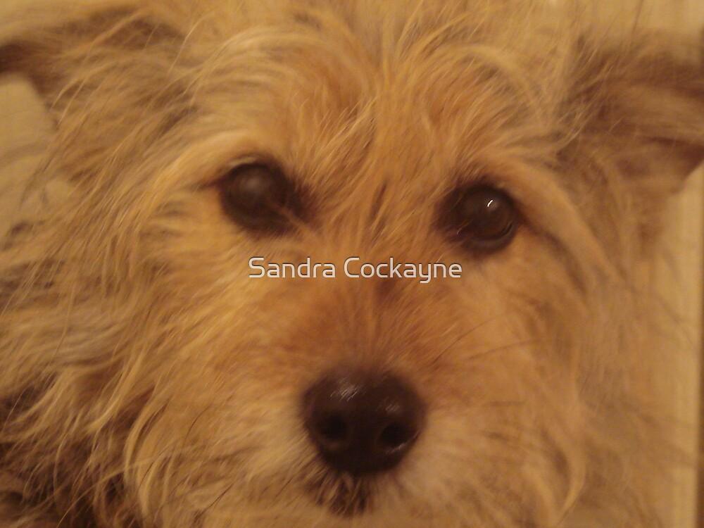 Tina The Terror Terrier! by Sandra Cockayne
