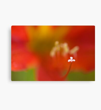 The Macro of Lily Canvas Print