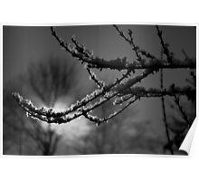 Snow Sprinkled Branch Poster
