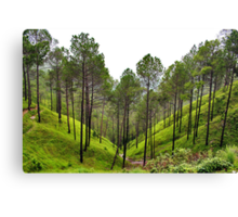 Woods of Himalaya  Canvas Print