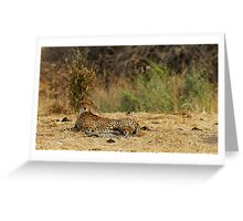 "Cheetah ""love story"" with her cubs Greeting Card"