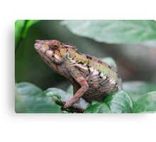 MOST WANTED Metal Print