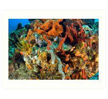Coral, Marine Life Art Print