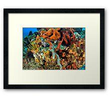 Coral, Marine Life Framed Print