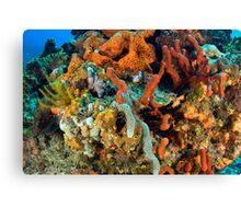 Coral, Marine Life Canvas Print
