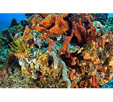 Coral, Marine Life Photographic Print