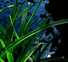 Abstract - Plant, Water and Light by jojocraig