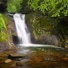 The Devil's Garden - Blue Ridge Parkway Waterfall by Dave Allen