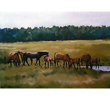 Mares and Foals Horse Pastel Painting Photographic Print