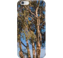 Mission Ranch Eucalyptus - Carmel, CA iPhone Case/Skin