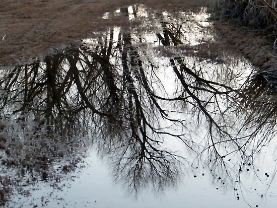 Puddle Reflections by R&PChristianDesign &Photography