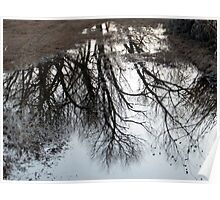 Puddle Reflections Poster
