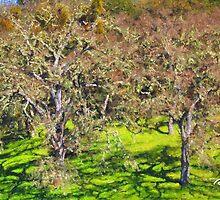 Oak Grove - Carmel Valley by JimPavelle
