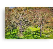 Oak Grove - Carmel Valley Canvas Print