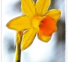 ~ Lady Daffodil ~ by Brenda Boisvert