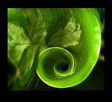 Spiral Leaf by 4Flexiway