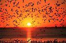 GULLS AT SUNSET by Chuck Wickham