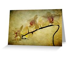 Orchid Textures Greeting Card