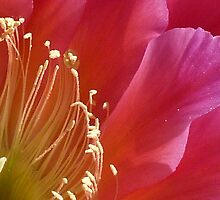 Anthers and stamens by Linda Sparks