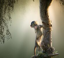 Baby Baboon in tree by johanswanepoel