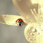 Good Morning Little Ladybug by Shelly Harris