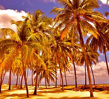 Palms on Half Moon Caye II  by Valerie Rosen