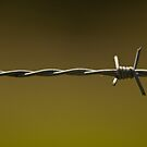Barbwire by William Krause