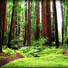 Humboldt Redwoods State Park by Kylie Moroney