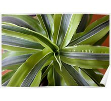 Dragon plant Poster