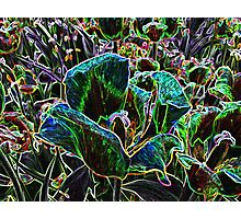 Wild Flower Colorful Tulip Abstract Photographic Print