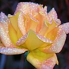 Raindrops on Roses by Barnbk02