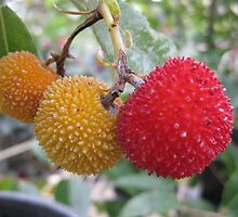 Three fruit of the tree strawberry by Marilyn Baldey