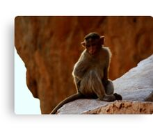 Them monkeys in the barrel went off without me >.< Canvas Print