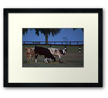 Cows Evening Glory Framed Print