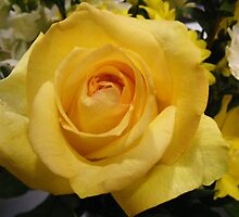 The Yellow Rose by barnsis