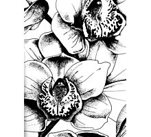 Ink Orchids Photographic Print