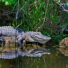 Happy Gator by Bill Wetmore