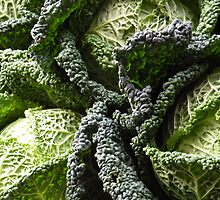 Savoy Cabbages by Barnbk02