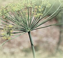 Dill by Tracey Hampton