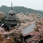 Flower  Temple , Yoshino   JAPAN by yoshiaki nagashima