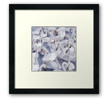 Softly Softly Swan Lake Framed Print