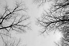 Synapse by Eric Scott Birdwhistell