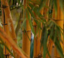 Bamboo by Scott Dovey
