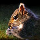 """Seed Snatcher"" by Melinda Stewart Page"