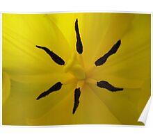 Yelllow Flower Legs Poster