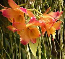 Dendrobium Orchid  by Rosalie Scanlon