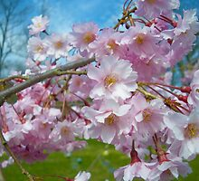 Blossoms by DeWolf