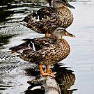 Quack - 3 by Eric Scott Birdwhistell