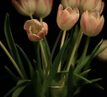 Marble Tulips by RockyWalley