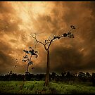 Lightning Tree by tomcelroy